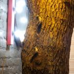 """Студия """"Выставка снов"""" Настоящее дерево"""
